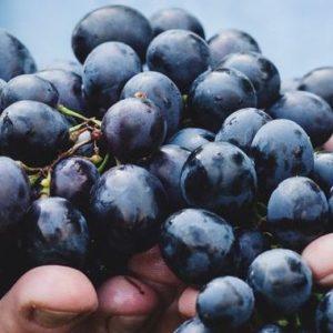 Grappolo d'uva tra le mani